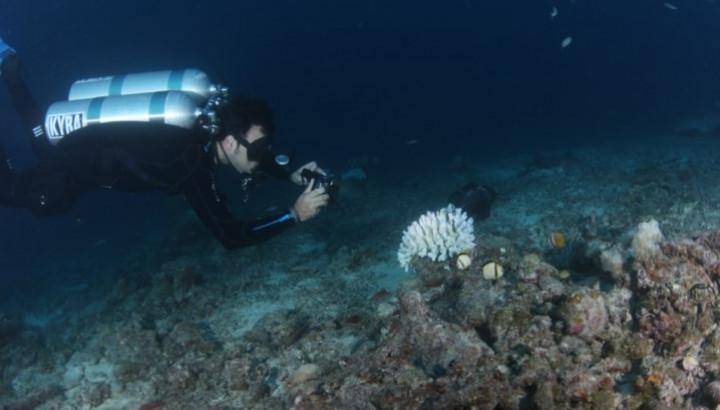 Foto: Jornal Público | Pedro Rodrigues Frade fez parte da equipa que monitorizou o branqueamento de corais na Grande Barreira de Coral